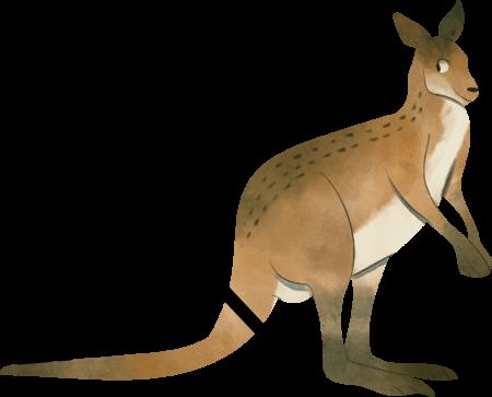 Konkurs matematyczny Kangur 2020 !!!
